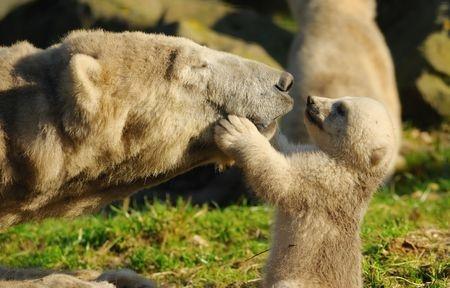 Mum and Baby - Bears Oxytocin