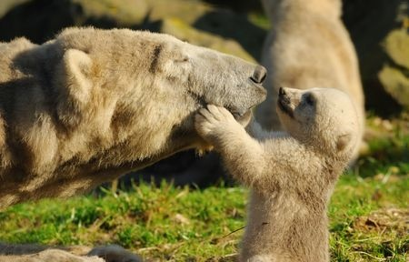 Mum and Baby - Bears Oxytocin